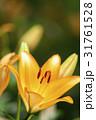 クローズアップ 花 植物の写真 31761528