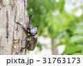 日本のカブトムシ 31763173