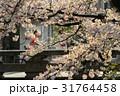 日本 さくら サクラの写真 31764458