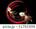 金魚 リュウキン 波紋のイラスト 31765999