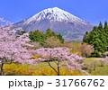富士山 桜 ソメイヨシノの写真 31766762
