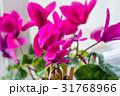 花 親密 閉じるの写真 31768966