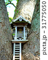 樹の神殿 31775050