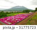 色鮮やかな芝桜と羊蹄山02 31775723