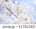桜 春 晴れの写真 31781363