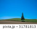木 青空 空の写真 31781813