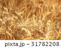 麦畑 31782208