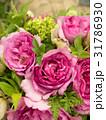 バラの花 31786930