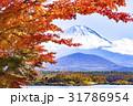 富士山 紅葉 モミジの写真 31786954