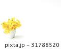 姫立金花 31788520