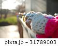 ウトナイ湖の道の駅で休息する小鳥たち02 31789003