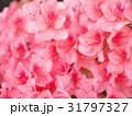 ツツジ 花 ピンクの写真 31797327