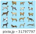 わんこ 犬 ベクタのイラスト 31797797