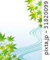 和風 背景 青紅葉のイラスト 31820099