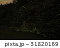 ホタル 光跡 夜の写真 31820169