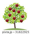 リンゴ 31822925