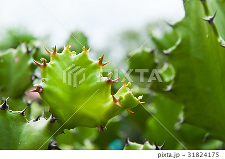 Green cactus on nature background. 31824175