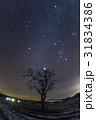 木と冬のダイヤモンド 31834386