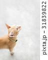 かわいらしい 可愛らしい 動物の写真 31839822