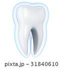 歯 保護 守るのイラスト 31840610