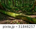 苔の森 31846257