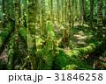 苔の森 31846258