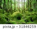 苔の森 31846259