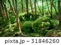 苔の森 31846260