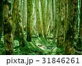 苔の森 31846261