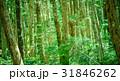 苔の森 31846262
