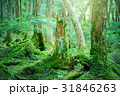 苔の森 31846263