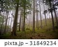 もや 霧 ミスティーの写真 31849234