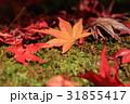 紅葉 もみじ 秋の写真 31855417
