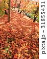 紅葉 もみじ 秋の写真 31855431