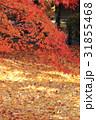 紅葉 もみじ 秋の写真 31855468