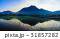 湯布院の夜明け 田植え田園風景 パノラマ 31857282