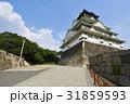 大阪城 天守閣 青空の写真 31859593
