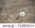 たんぽぽ 綿毛 31863014