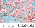桜 サクラ フラワーの写真 31864168