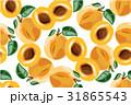 アプリコット アンズ 杏のイラスト 31865543