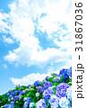 晴れの日のアジサイ 紫陽花 あじさい 梅雨時期 31867036