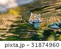 泳ぐ トラ 動物園 31874960