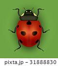 てんとうむし てんとう虫 テントウムシのイラスト 31888830