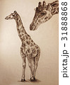 giraffe pencil drawing with paper texture 31888868