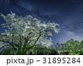 一本桜 夜 夜桜の写真 31895284