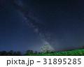 一本桜 夜 夜桜の写真 31895285