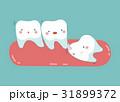 口腔病学 手術 歯のイラスト 31899372