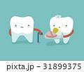 口腔病学 手術 歯のイラスト 31899375