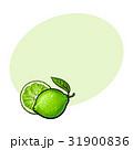 丸ごと 全体 ベクトルのイラスト 31900836