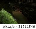 蛍 光 夜の写真 31911549